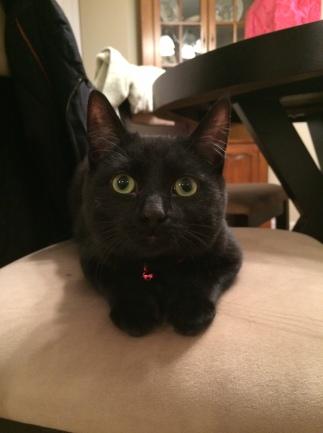What a little fur ball!