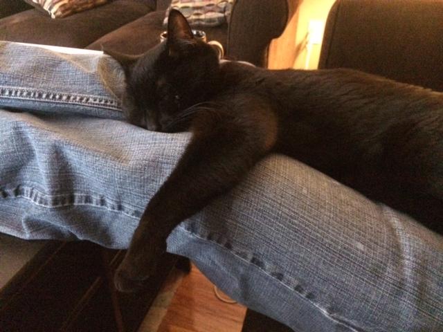 sleepy-Oscar