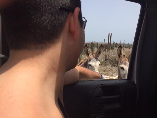 goat-petting