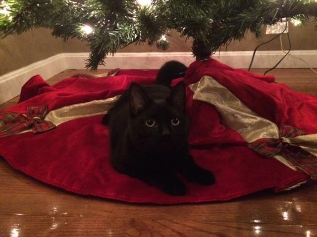 oscar-christmas-tree